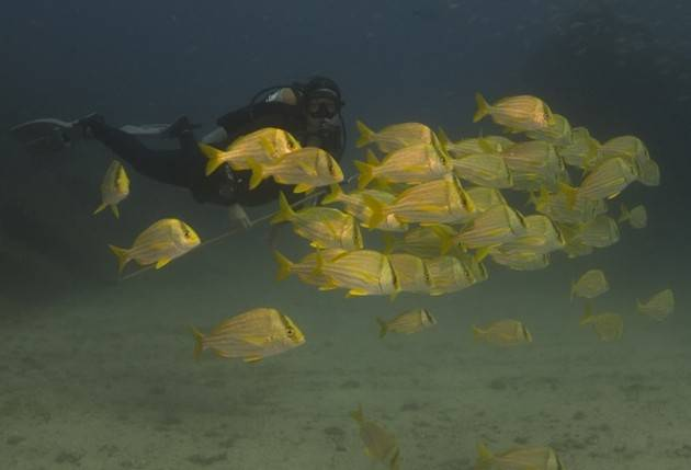 Andrea-with-fish-school-and-wreck_630_429_70