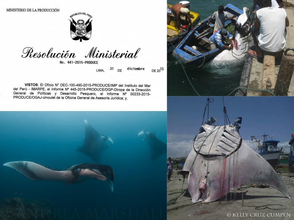 Peru Manta Ray Protection