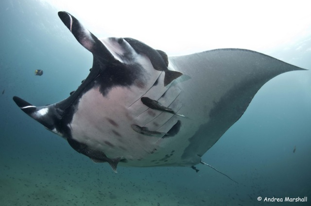 Supermanta-portrait-Ecuador-best-copy