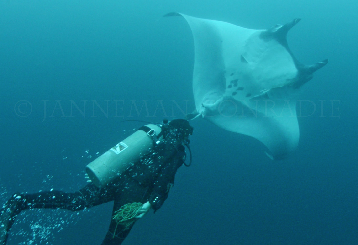 Manta after rescue