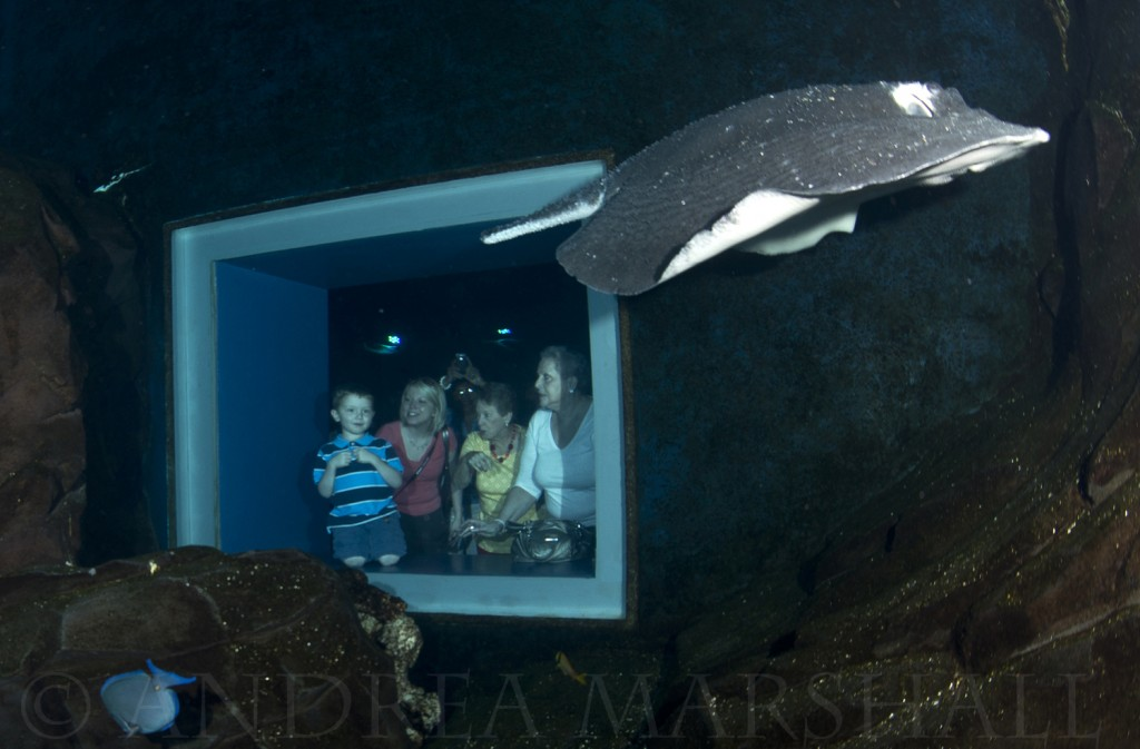 Aquariums for family